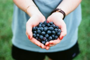 Our Favorite: Pick-Your-Own Blueberry Farms in MA